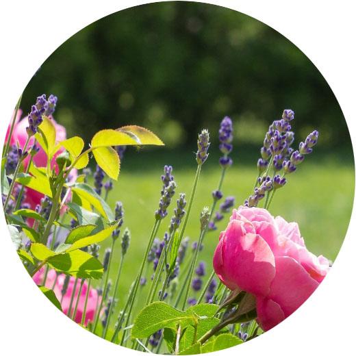 季節の草花を楽しむ